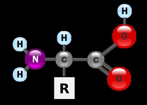 aminosyror träning