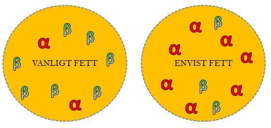 Figur 3. Schematisk bild över lokalisering av visceralt fett och underhudsfett. Det envisa fettet med betydligt fler ?-receptorer än det vanliga underhudsfettet.