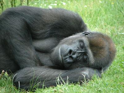 En paltkoma slår det mesta i sömnväg. (bildkälla: sxc.hu)