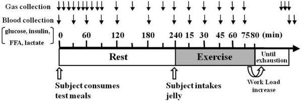 Experimentprotokoll som visar tiderna för insamling av värden. FFA = Fria fettsyror.